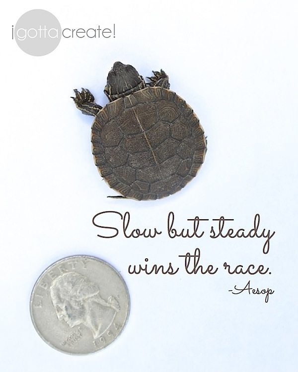 Slow but steady wins the race. Great reminder, sweet image. | visit I Gotta Create!