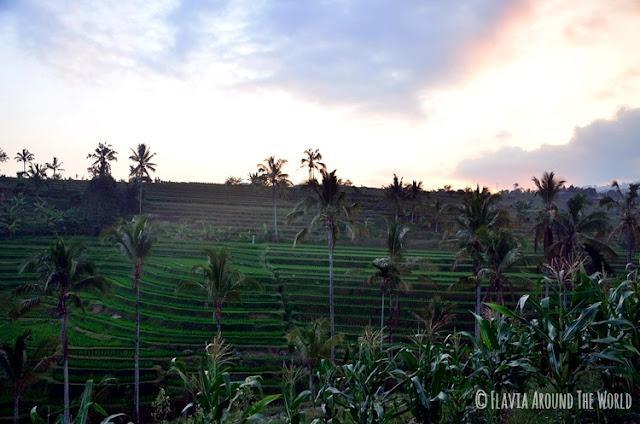 Atardecer Jatiluwih bali terrazas arroz