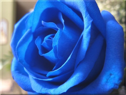Amit Wallpaper 3d Best Profile Pictures Beautiful Rose Flower Pictures