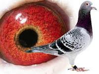 www.lensalovebird.com