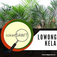 Loker Sawit - PT. Karyamas Adinusantara Staff ISPO - Sustainability (Fresh Graduate)