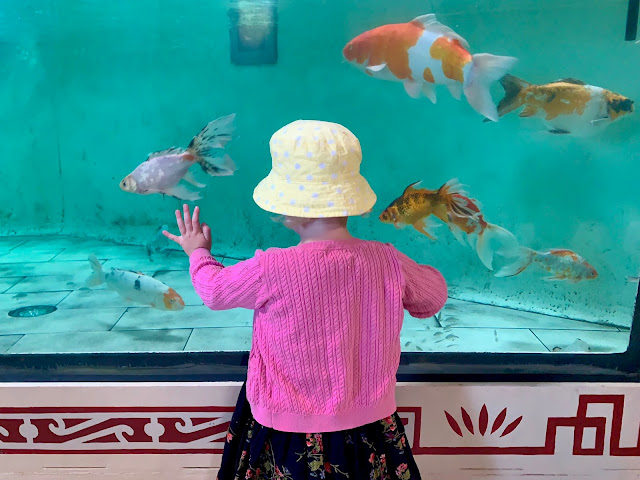 Toddler pressed up against a fish tank at Colchester Zoo