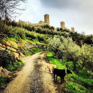 Flying Dogs To Italy : Harley and Boomer outside Castello di Montecchio in Tuscany