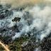 Vanishing Amazon