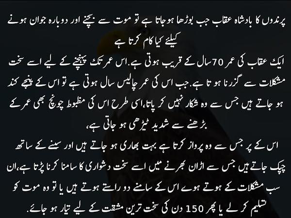 A Beautiful Urdu Tehreer - پرندوں کا بادشاہ عقاب