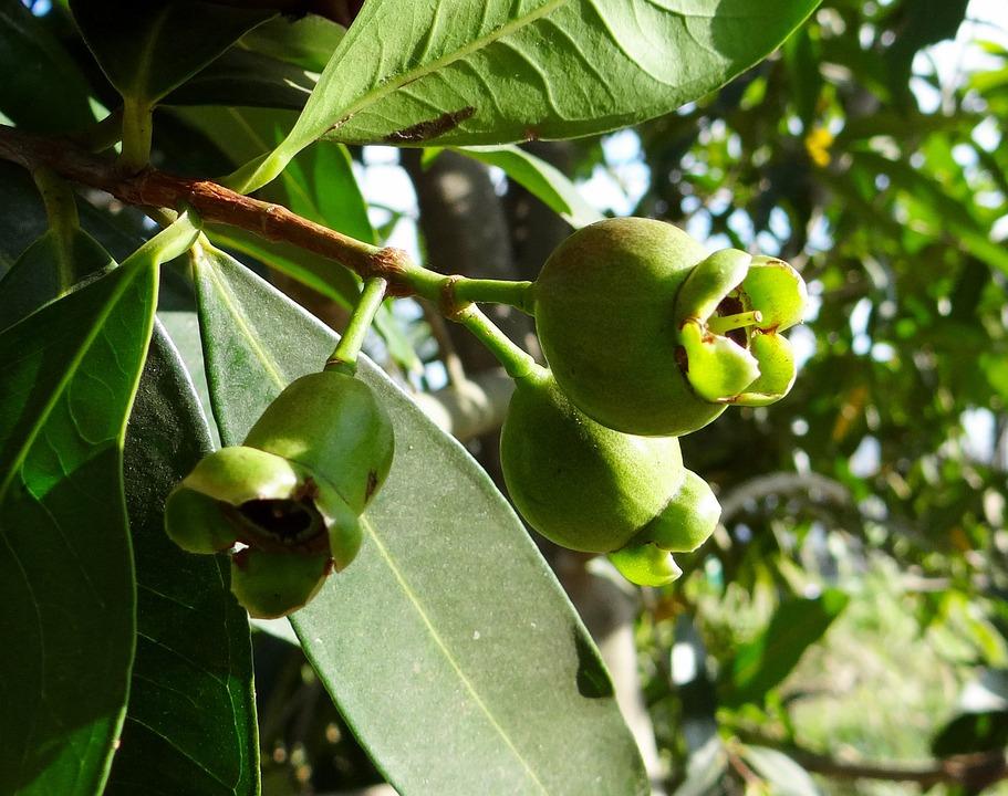Pengertian Perkembangbiakan Generatif Dan 10 Contoh Tumbuhan Yang Berkembang Biak Dengan Generatif Bimbel Brilian