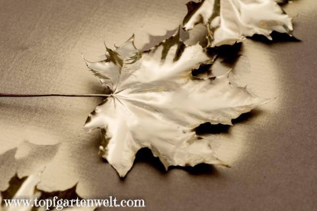 Herbstdeko mit Goldspray selber basteln - Gartenblog Topfgartenwelt