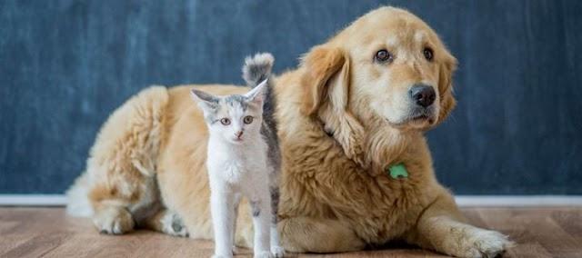 Αυτοί είναι οι λόγοι που τα αδέσποτα γίνονται καλύτερα pets