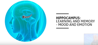 The hippocampus - learning and memory, mood and emotion