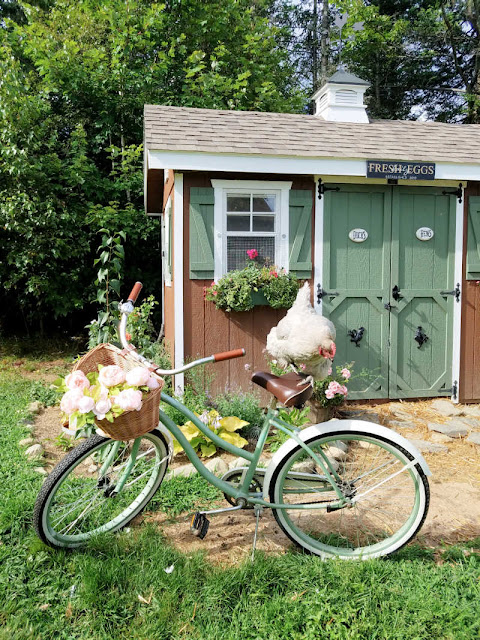 Chicken on bicycle in front of chicken coop