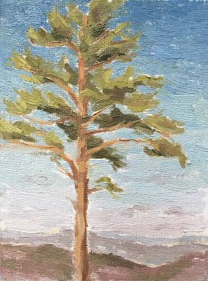 #31 'Pine Tree, Devils Punch Bowl' 6×8″