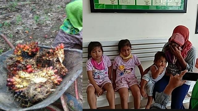 Ibu 3 Anak Ini Akan Diadili karena Curi Sawit yang Rugikan PTPN Rp76.500