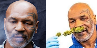 I and my business partner smoke about $40K Indian hemp monthly —Mike Tyson