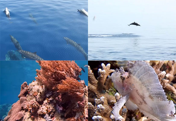 Wisata di Pulau Wakatobi Sulawesi Tenggara