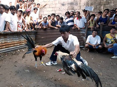 Taktik Sabung Ayam Online