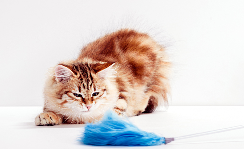 Four Ways to Keep Your Cat's Brain Sharp