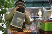 Warga New York Semakin Banyak yang Beternak Lebah