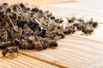 Governo favorece novamente a indústria dos venenos, mortes de abelhas, e consequências a biodiversidade