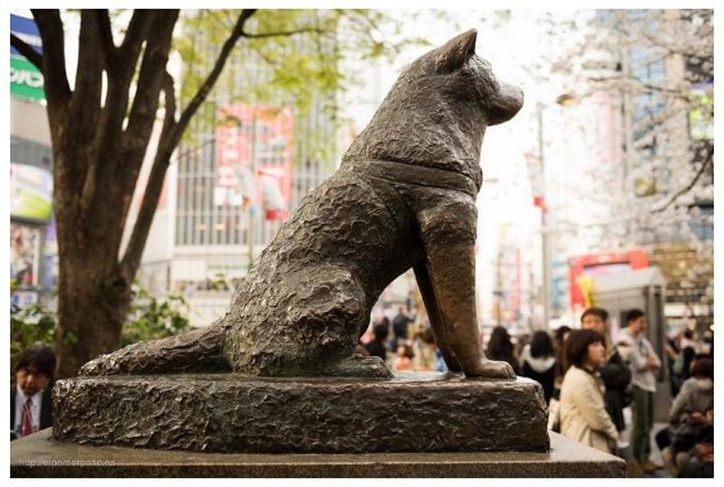 Năm Mậu tuất nhớ lại chú chó Hachiko của Nhật
