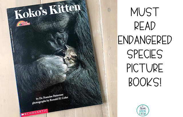 Kokos Kitten picture book story