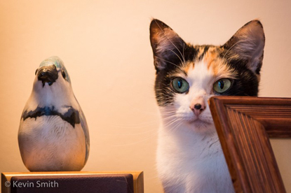 tortoiseshell-and-white cat standing next to penguin ornament