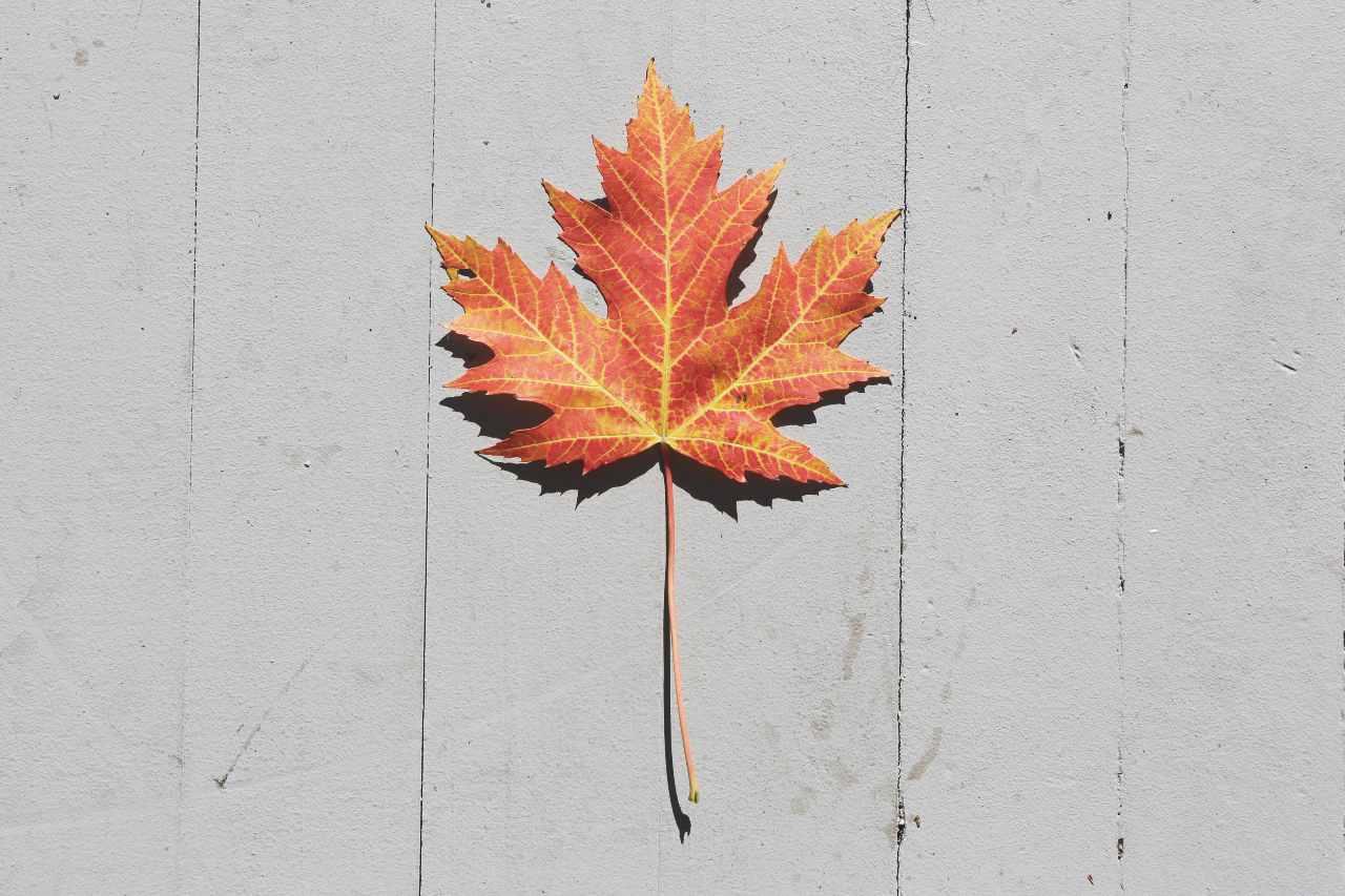 Autumn Competition