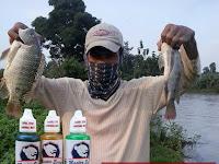 Essen Nila Yang Jitu Ampuh Anti Zonk