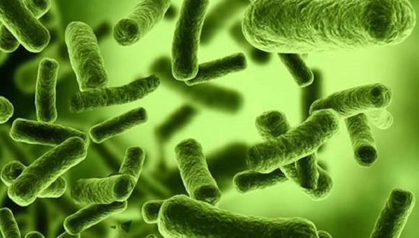 Resultado de imagem para candidiase fungos