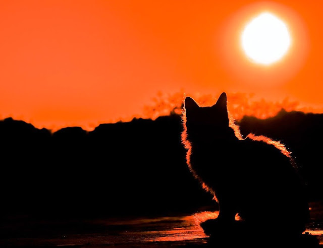Arti Mimpi Kucing Menurut Islam Dan Kucing Di Mata Manusia