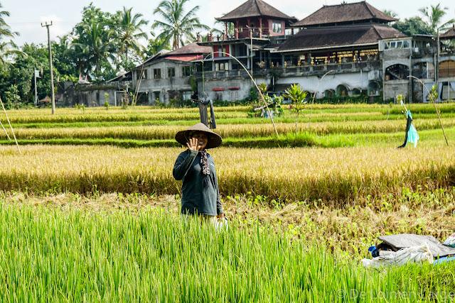 Rizières Tegallalang - Ubud - Bali