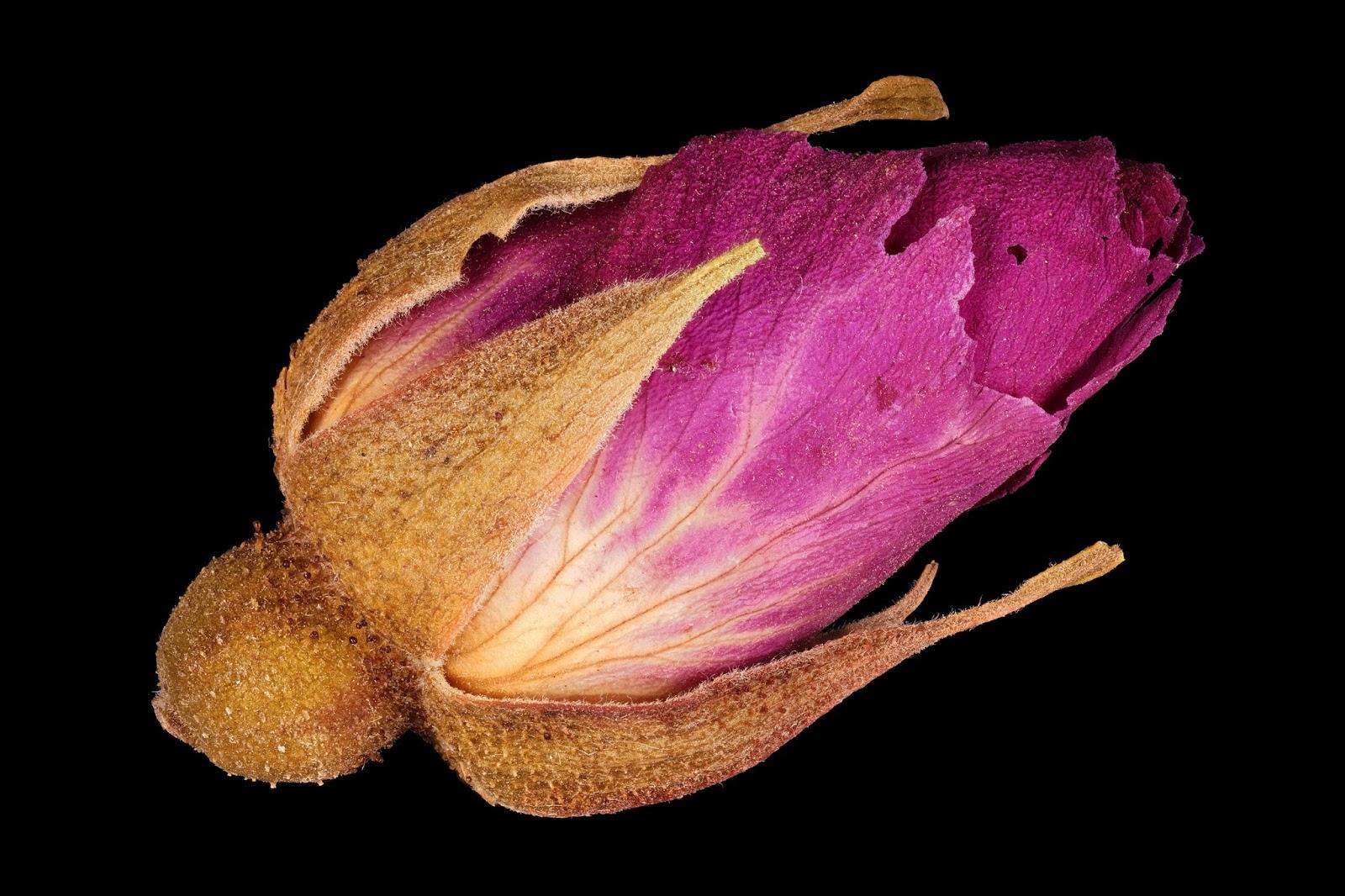 Макрофотография цветка