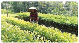 Usaha penjualan bibit tanaman www.simplenews.me