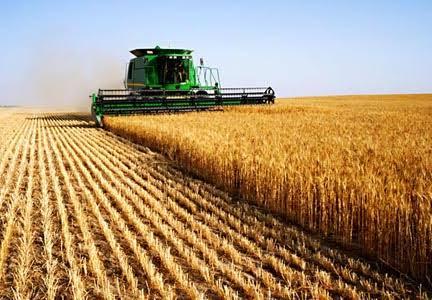 """. """"الزراعة"""" تعلن توصيات هامة لمزارعي القمح مع بداية موسم الحصاد.. لتجنب تقليل الفاقد والحد من الزحام خلال التوريد"""