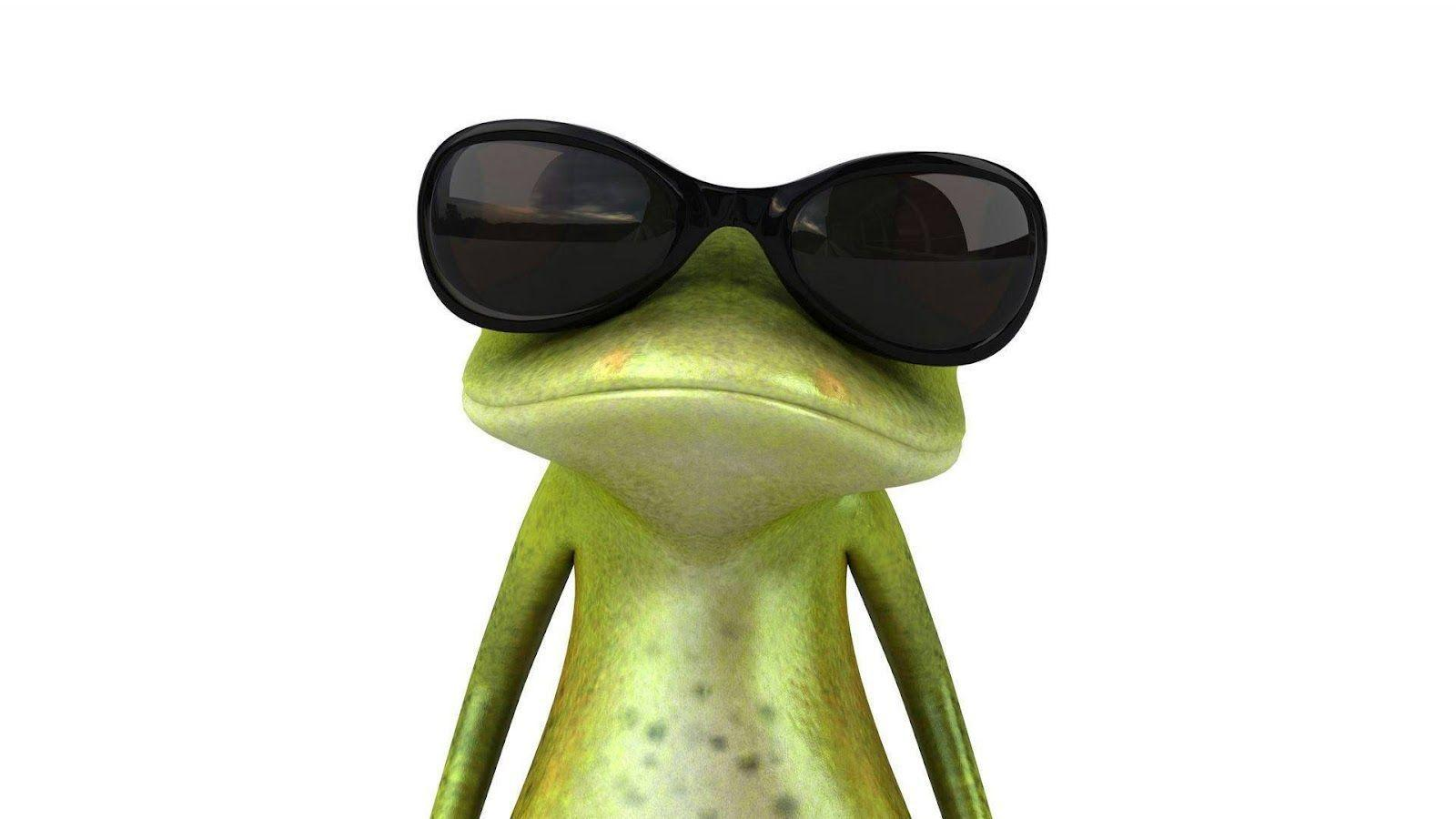 Funny Frog Wallpapers  computer images