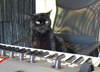 Mojo The Cat