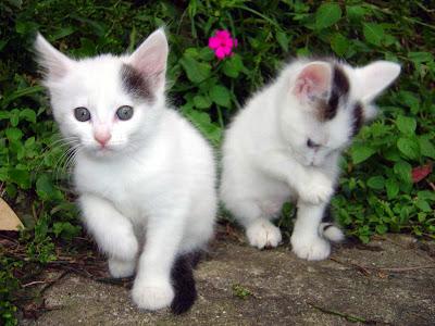 Beauteous-Kittens.jpeg