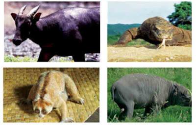 Contoh fauna peralihan