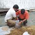 Mushroom spawn supplier in Solapur