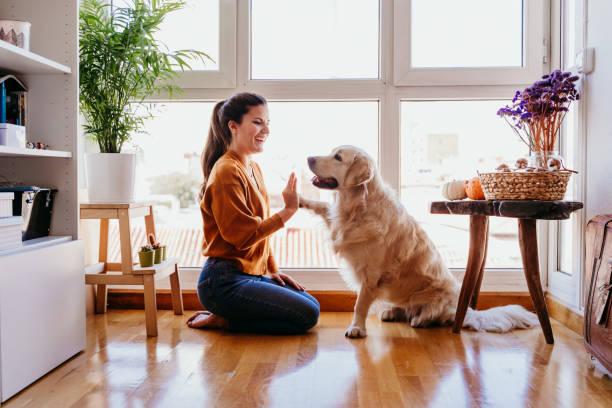 Adopting an Older Golden Retriever