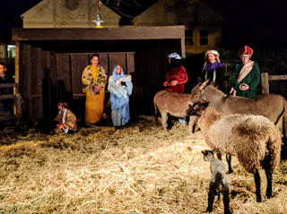 living nativity with newborn lambs at First Presbyterian Church Santa Rosa 2016