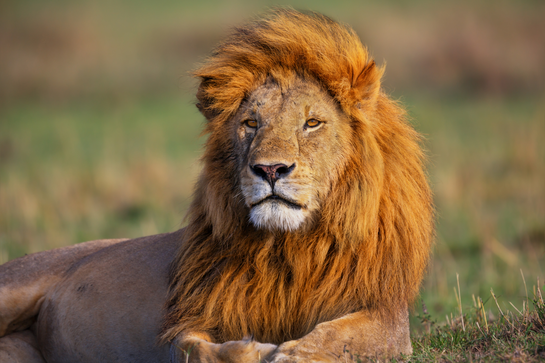 Las opciones binarias den leones