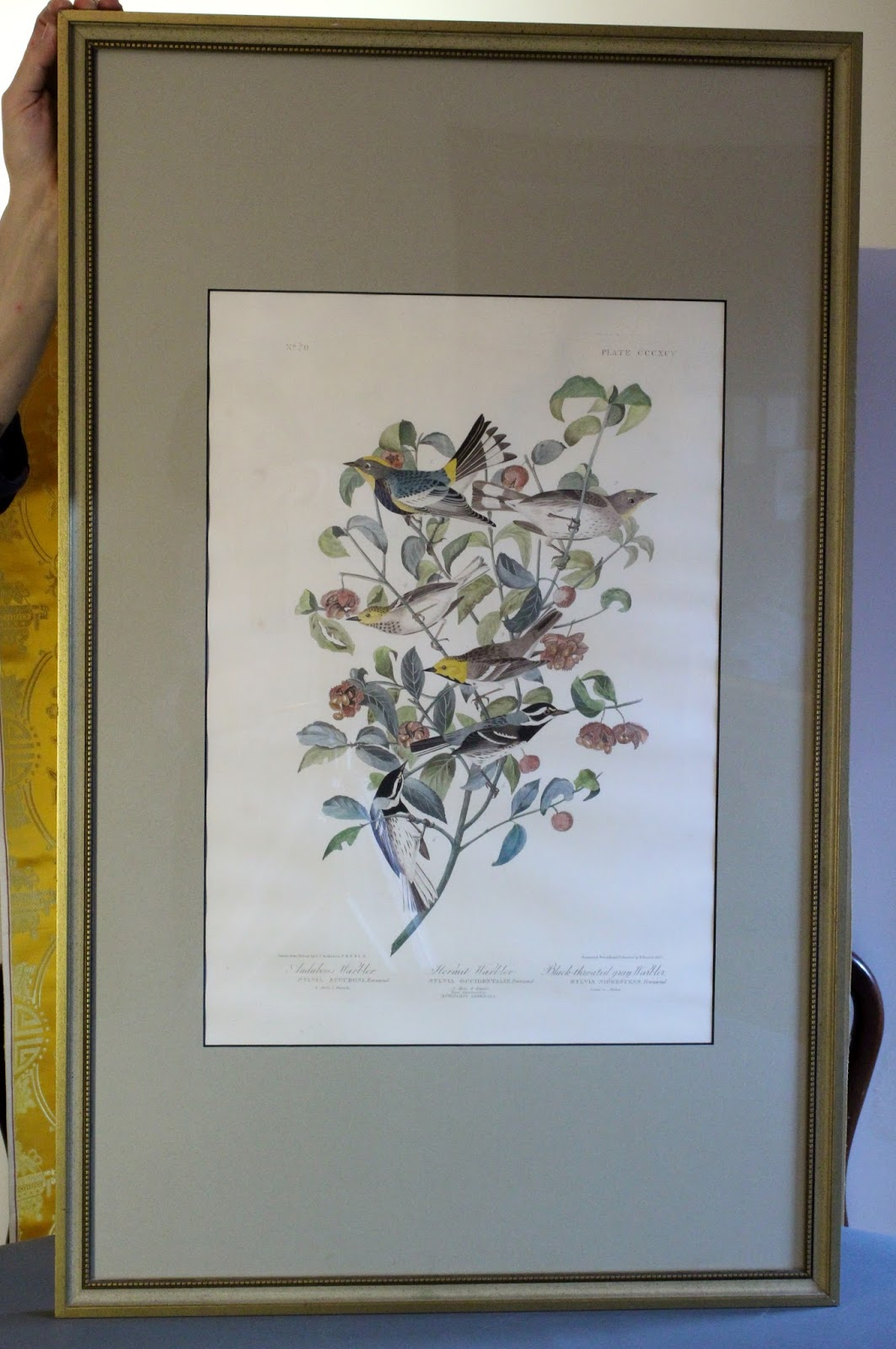 An Original Framed Print Of Audubon Warbler Hermit Black Throated C1827 1838 From Birds America The Elephant Folio