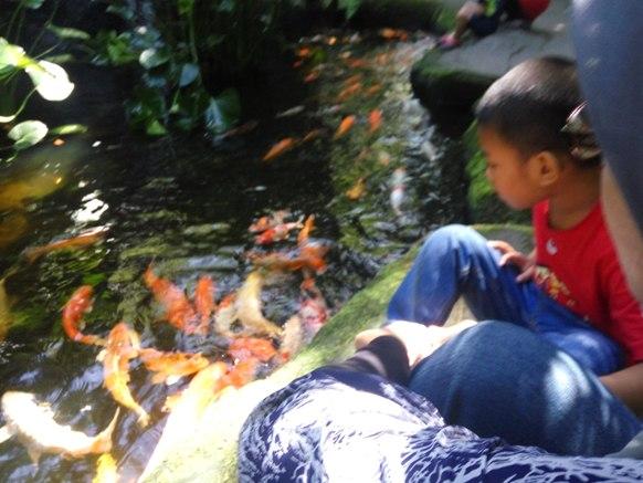 anak anak suka bagi ikan makan