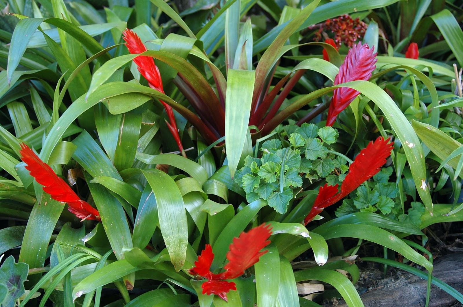Floraciones en m laga y m s floraciones y plantas de mi for Plantas para mi jardin
