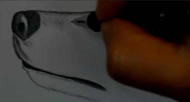 رسم رأس كلب بالرصاص