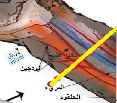 احكام الصيد والذبائح - فقه شافعي (اجيال الاندلس )