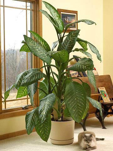 Planters For Indoor Plants