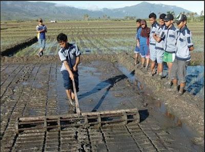 Penggaris sawah Alat-alat Pertanian