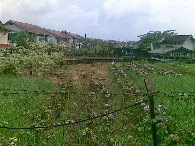Foto(5091) Jual Tanah Villa | Jual Villa + kebun jual tanah di puncak jual tanah di taman bunga nusantara