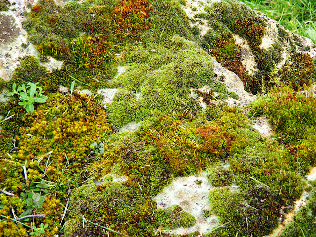 Mossy rock.  Indre et Loire, France. Photographed by Susan Walter. Tour the Loire Valley with a classic car and a private guide.